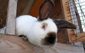 Как оборудовать крольчатник?