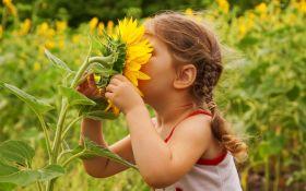 Цветы солнца: как вырастить подсолнухи