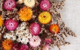 ТОП-6 универсальных сухоцветов: выращивание и создание декоративных композиций