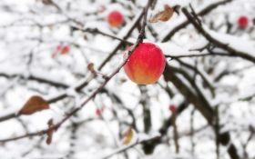 Антикризисное садоводство: как уберечь деревья от засухи и морозов