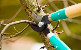 Осень: время обрезать деревья