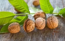 Скороплодные орехи из семян: как их вырастить?