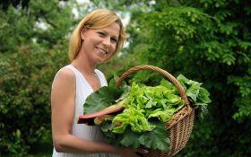 Участок в тени: какие овощные культуры выращивать?