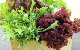 Листовой салат: ценный состав и полезные свойства