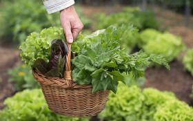 Виды и сорта салата: какой выбрать?