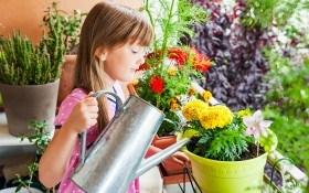 Цветник на балконе: как оформить мини-сад у себя дома