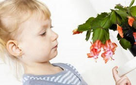 Шлюмбергера — загадочный цветок: необходимый уход круглый год