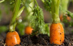 5 причин горечи моркови и 4 способа ее предотвратить