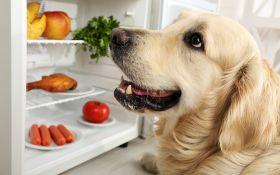Чего не следует есть собаке? Список основных табу