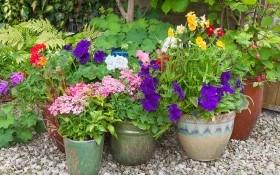 Контейнерный цветник: готовим почвенную смесь