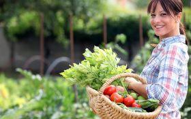 Планируем огородный сезон: правила подбора и размещения культур