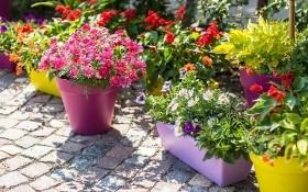 Сады и цветники в контейнерах: растения для мини сада