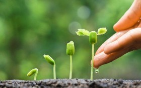 Подкормка —  дополнительное питание растений