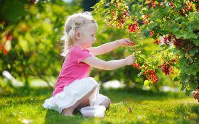 Рациональный ягодник: как компактно все разместить