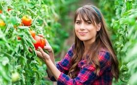 Без «мелочей» нет урожая: 5 рекомендаций по выращиванию томатов