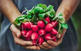 Как сделать сеялку для посева редиса своими руками?