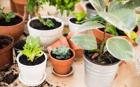 Десятка самых стойких и непритязательных комнатных растений