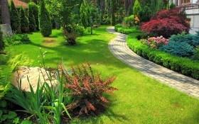 6 советов по созданию композиций из хвойных растений