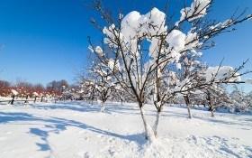 ТОП-10 важных агромероприятий для садоводов в январе
