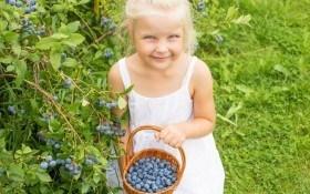 Голубика: подкормка и защита растения