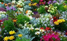 Цветоводы в июне: день за днем