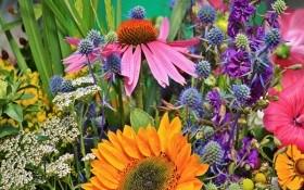 Аптека на грядке: выращиваем лекарственные травы