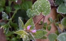 Холода возвращаются: как уберечь растения