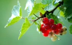 Садовые «скульптуры»: обрезка ягодных кустарников
