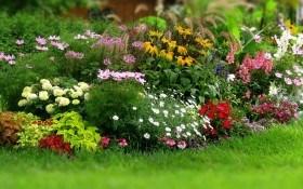 Многолетние цветы для летнего посева