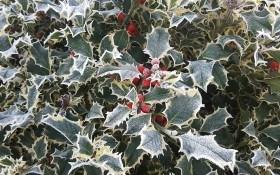 Прелесть зимнего сада