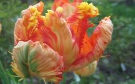 Пестрые попугаи в весеннем цветнике