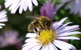 Как защитить пчел от клещей, птиц в августе