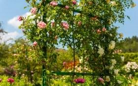 Яркое убранство зеленых вертикалей: как использовать вертикальное озеленение в садовом дизайне