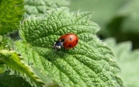 Насекомые в саду: Полезные против Вредных