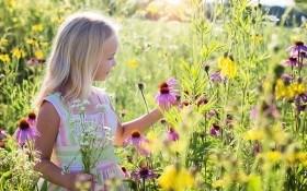 Сила и дух разнотравья – для здоровой почвы