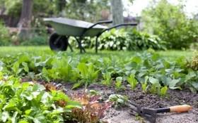 Майские вредители растений: когда появляются и как с ними бороться