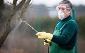 Осенняя обработка сада от вредителей и болезней: чем опрыскивать плодовые деревья