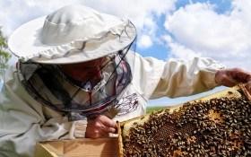 Разведение пчел: советы новичкам пчеловодам – практика