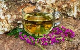 Легендарная плакун-трава: уход, магические свойства, применение в народной медицине