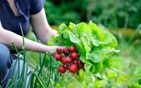 Особенности посева овощей в августе