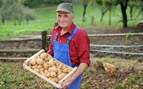 Когда собирать урожай картошки
