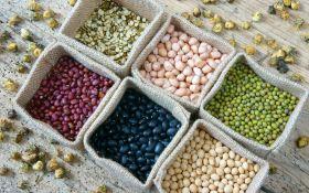 Проращивание семян: от чего зависит высокий результат