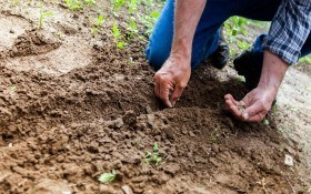 Предпосевная обработка семян – мобилизируем скрытые резервы