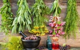 Сбор пряных трав: сроки и способы заготовки