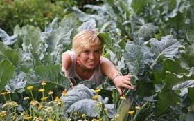 Палитра салатов: сеем в августе
