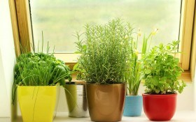 Зимний кухонный садик — территория весны
