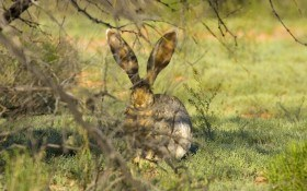 Как защитить сад от зайцев