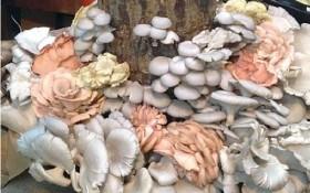 Как вырастить грибы на древесине