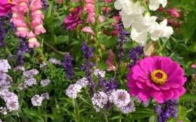 Последние дни зимы: планируем посадку цветника