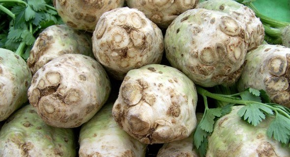 Сельдерей – полезен от макушки до корней